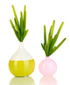 Cactuses in vase isolated on white — Stock Photo