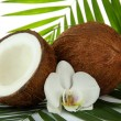 Постер, плакат: Coconuts with leaves and flower close up