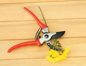 Secateurs with flower on wooden background — Foto Stock