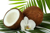 Coconuts with leaves and flower, close up — Stock Photo