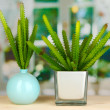 Cactuses in vases on windowsill — Stock Photo #19338615