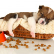 Beautiful little puppy sleeping in basket isolated on white — Stock Photo #19369463