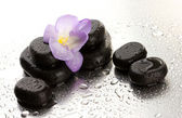 Spa stones and purple flower, on wet background — Stock Photo