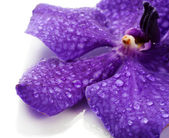 Purple orchid flower, isolated on white — Stock Photo