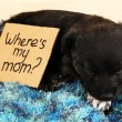 Cute puppy sleeping with sign — Stock Photo