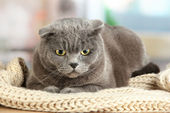 Cat in basket on table in room — Stock Photo