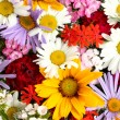 Beautiful bouquet of bright wildflowers, close up — Stock Photo #19598939