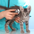 Veterinarian examining a kitten on blue background - Stock Photo