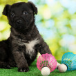 Stock Photo: Cute puppy with shuttlecocks on green grass outdoor