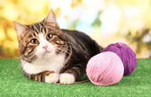 Cat with threads on grass on bright background — Stock Photo