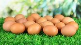 Viele eier auf gras auf hellem hintergrund — Stockfoto