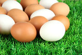 Many eggs on grass — Stock Photo