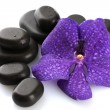 Spa stones and purple flower, isolated on white — Stock Photo