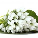 Постер, плакат: Beautiful bouquet of snowdrops isolated on white
