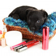 Cute puppy in basket and cosmetics isolated on white — Stock Photo