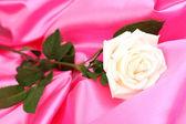 Beautiful rose on pink cloth — Foto Stock