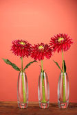 Beautiful red dahlias in vases on red background — Stock Photo
