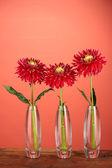 赤い背景の上の花瓶に美しい赤いダリア — ストック写真