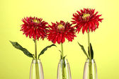 Beautiful red dahlias in vases on yellow background — Stock Photo