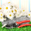 Daisies in  wicker basket on grass on blue background - Stock Photo