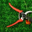 Royalty-Free Stock Photo: Secateurs with flower on green grass background