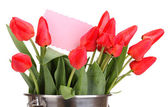 Beautiful tulips in bucket isolated on white — Foto Stock