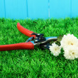 Secateurs with flower on grass on fence background - Foto de Stock