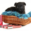 Cute puppy in basket and cosmetics isolated on white - Stock Photo