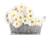 Daisies in wicker basket isolated on white — Stock Photo