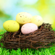 Colorful easter eggs on grass — Stock Photo #19893947