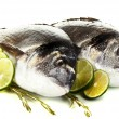 Two fish dorado with lemon isolated on white — Stock Photo