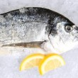 Dorado fish on ice — Stock Photo