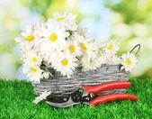 ромашки в плетеной корзине на траве на ярком фоне — Стоковое фото