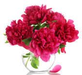 Beautiful pink peonies in glass vase isolated on white — Stock Photo