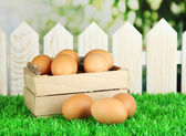 Many eggs in box on grass on bright background — Stock Photo