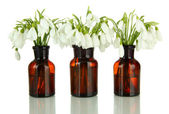 Snowdrop flowers in glass bottles, isolated on white — Stock Photo