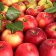 Juicy red apples with green leaves, close up — Stock Photo