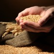 Man hands with grain, on brown background — 图库照片