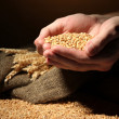 Man hands with grain, on brown background — Stock fotografie