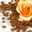 Decorative rose from dry orange peel with coffee beans on musical notes — Stock Photo