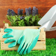 Garden tools on grass in yard — Stockfoto