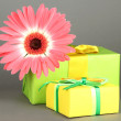 Beautiful Gerber flower with gifts on grey background — Stock Photo