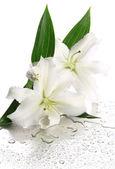 Krásné lilie, izolované na bílém — Stock fotografie