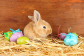 Fluffy foxy rabbit in a haystack with Easter eggs on wooden background — Stock Photo