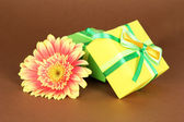 Beautiful Gerber flower with gifts on brown background — Stock Photo