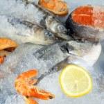 Fresh seafood on ice — Stock Photo #21357567