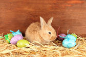 Fluffy foxy rabbit in a haystack with Easter eggs on wooden background — 图库照片