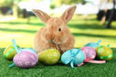 Fluffy foxy rabbit on grass with Easter eggs in park — Foto Stock