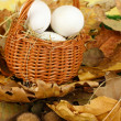 Easter eggs in wicker basket hidden in leaves - Stock Photo
