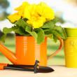 Beautiful yellow primula in watering can on wooden table on green background — Stock Photo